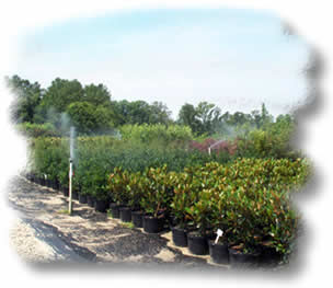 Panther Creek Nursery Irrigation